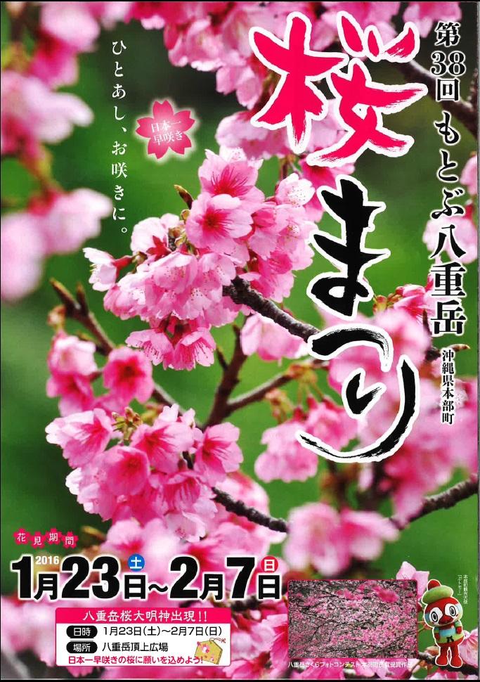 もとぶ桜まつり